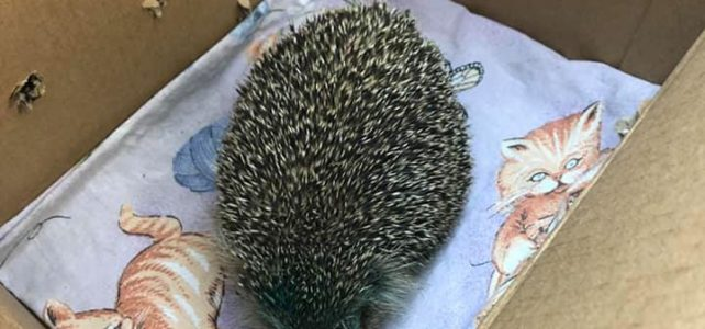 Още едно наранено животно е спасено!